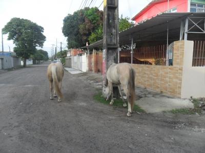 Rua dos Cavalos