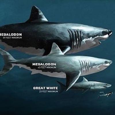 Os 10 monstros marinhos pré-históricos mais aterrorizantes