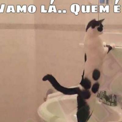 Gato com baixa autoestima