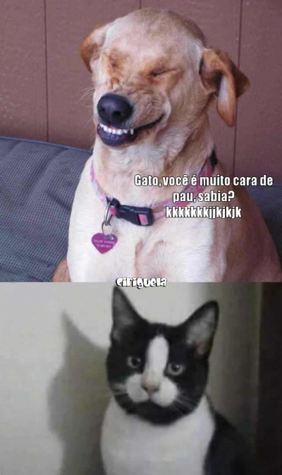 Um gato muito cara de pau