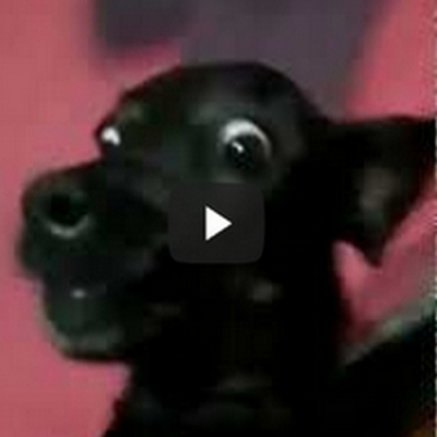 O cachorro do retardo