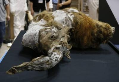 Sim, os Mamutes existiram