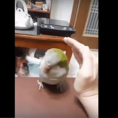 Um passarinho Carente
