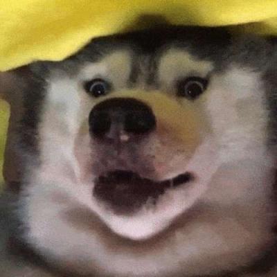 Um cachorro felizão