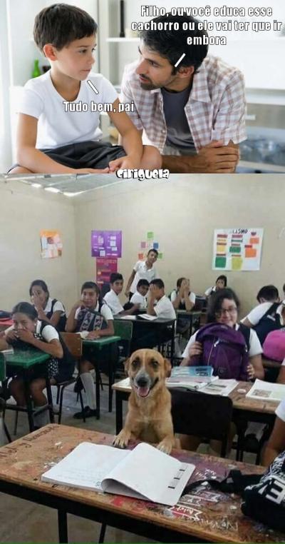 Como educar seu cachorro
