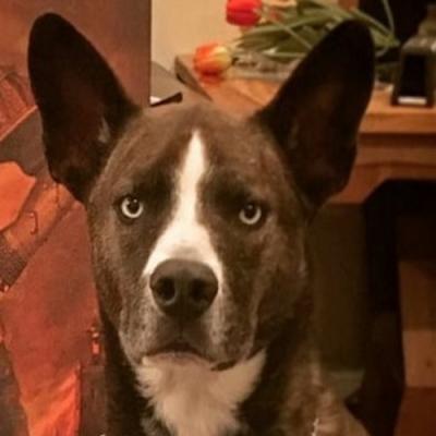 Brutus posando para a sua pintura