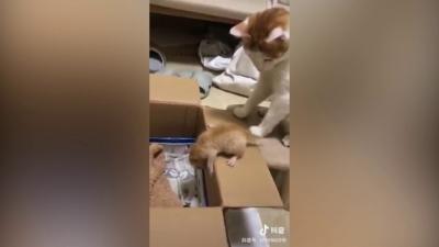 Mamãe gato estressada