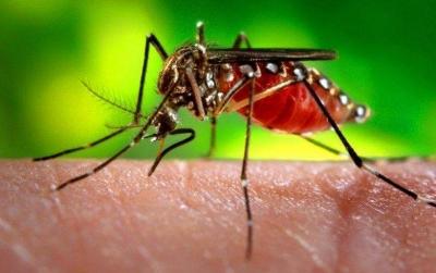 Mosquitos: Qual o motivo de picarem algumas pessoas mais que Outras?