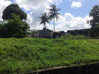 Cavalo Suicida
