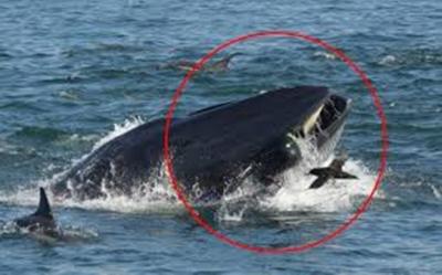 Fotógrafo foi abocanhado por baleia na Africa do Sul