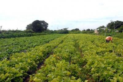 Bancos terão de destinar mais de R$ 61 bilhões para pequenos produtores