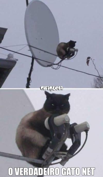 O verdadeiro gato net