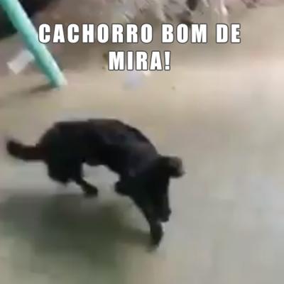 Cachorro bom de mira