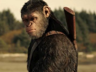Nunca irrite um macaco