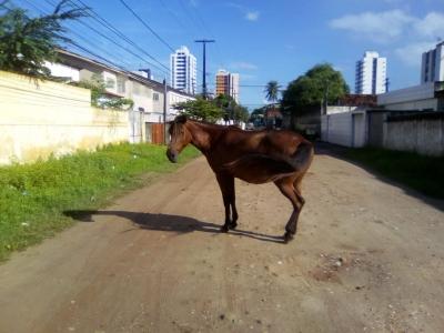 Cavalos x Prefeitura