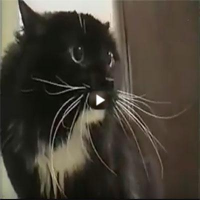 Aquele momento que seu gato começa a invocar espíritos