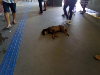 Cachorro dentro de terminal