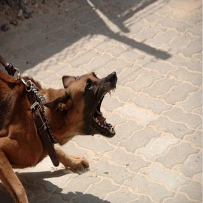 Como se defender de um ataque de um cachorro