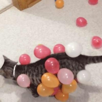 Entreteniento para gatos