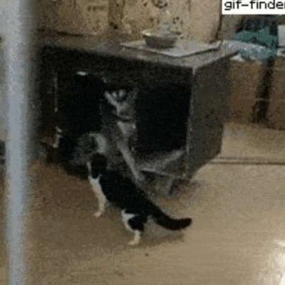 Medo do gatinho