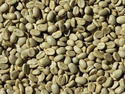 Green Cofee emagrece mesmo? FUNCIONA? e os seus benefícios?