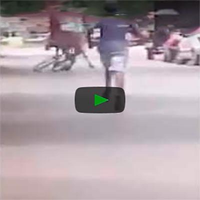 A violência está cada vez pior, até cavalo tá roubando bicicleta