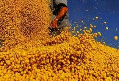 A China vai parar de importar grãos do Brasil?