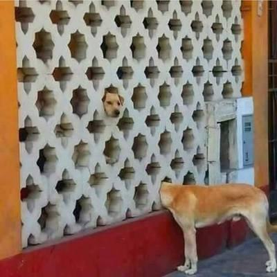 Albert: O cão que fareja fendas no espaço tempo