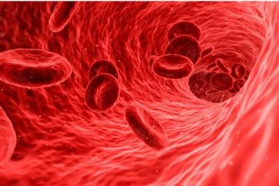 Proteína pode indicar predisposição a doenças cardiovasculares