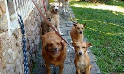 Justiça obriga homem a pagar pensão a animais de estimação
