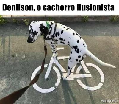 Denilson, o cachorro ilusionista