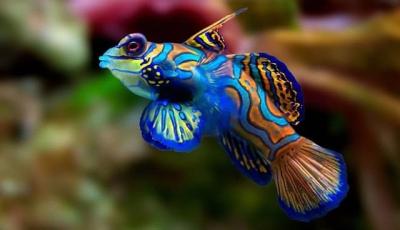 Qual o peixe mais caro do mundo?