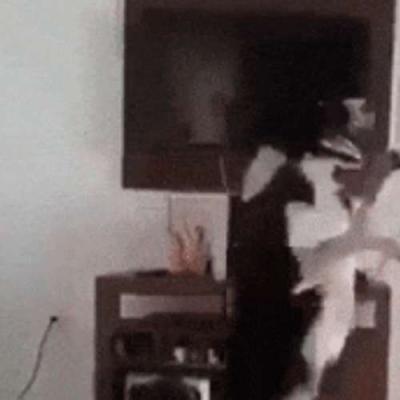 Chamou pra dançar ele dança