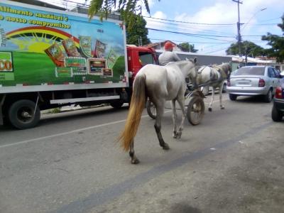 Carroça atrapalhando o trânsito