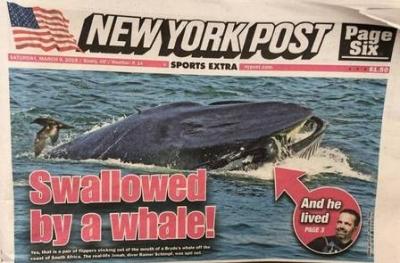Mergulhador é engolido e cuspido por baleia