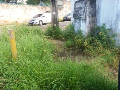 Muito mato em rua do Recife