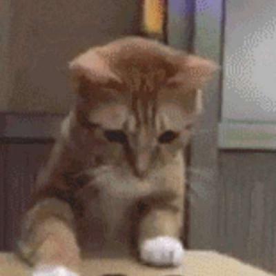 Um gato com preguiça de brincar