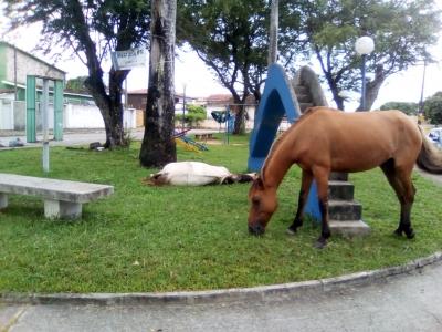 Cavalos na Praça