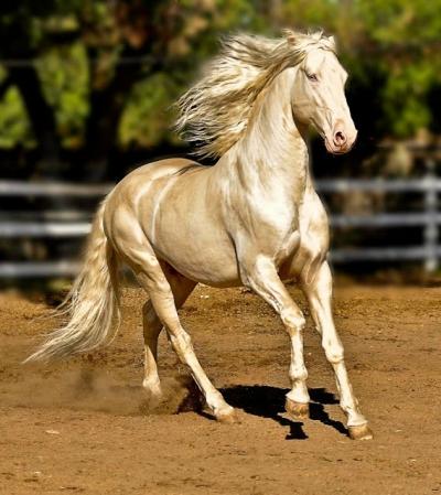 Os cavalos mais incríveis e raros que você vai ver na sua vida