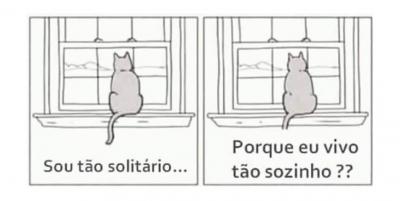 Por que os gatos se sentem tão solitários