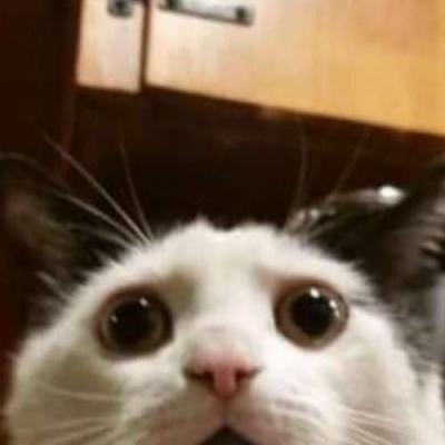 Gato surpreso naturalmente
