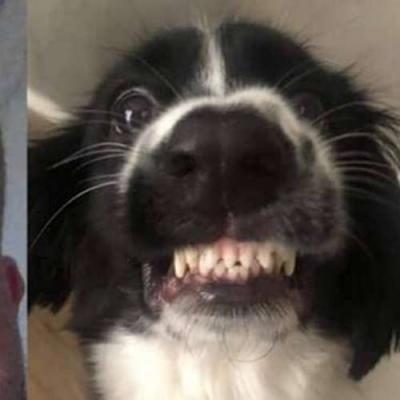 Nunca confie de mais no seu cachorro endemoniado!