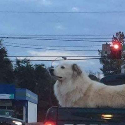 É um doge