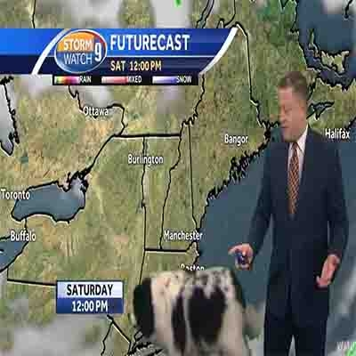 Cachorrinha 'invade' estúdio durante previsão do tempo