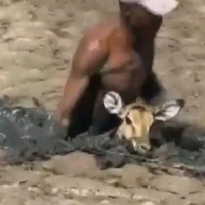 Homem resgata cervo preso em lago de lama