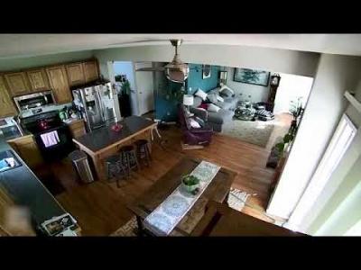 Cachorro vingativo arrasta mangueira para dentro de casa