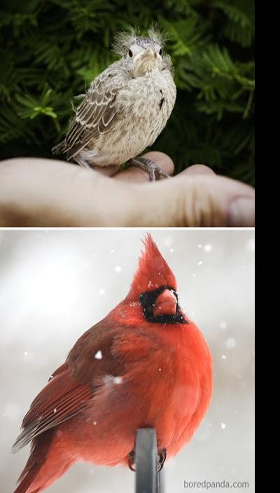 Aves antes e depois delas crescerem