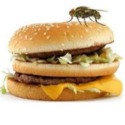O que acontece quando uma mosca pousa na sua comida?