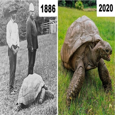 Conheça Jonathan - A tartaruga mais velha do mundo