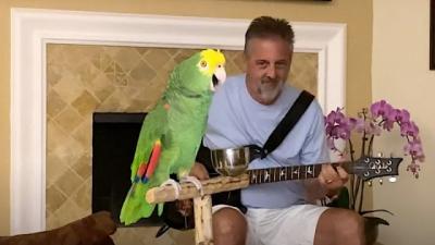 Papagaio acompanha homem no violão de maneira perfeita